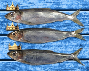 The fish of kings?